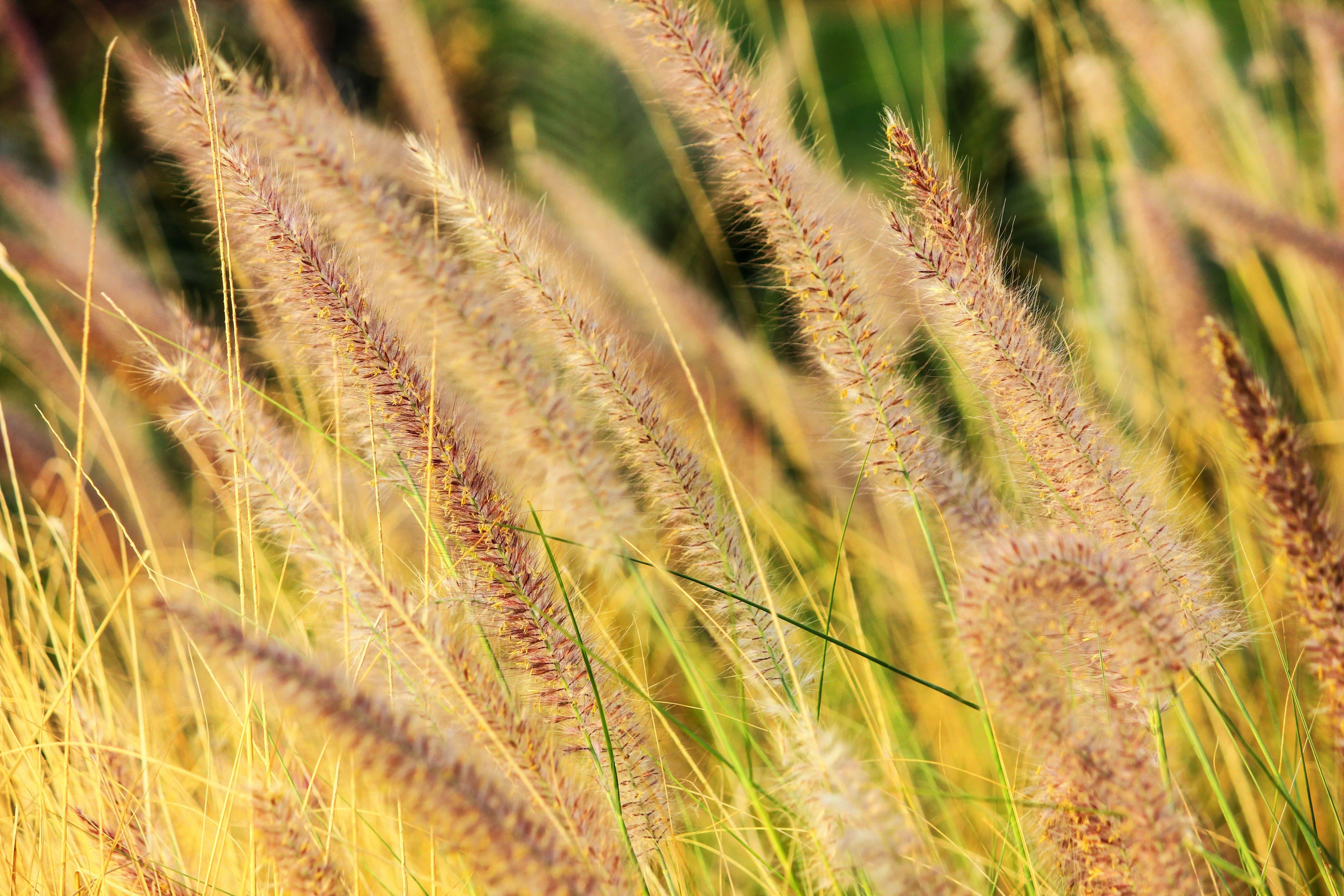 Kostenloses Stock Foto zu natur, feld, bauernhof, gras