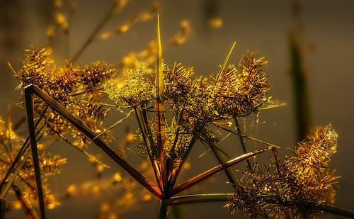 Gratis lagerfoto af græs, lys