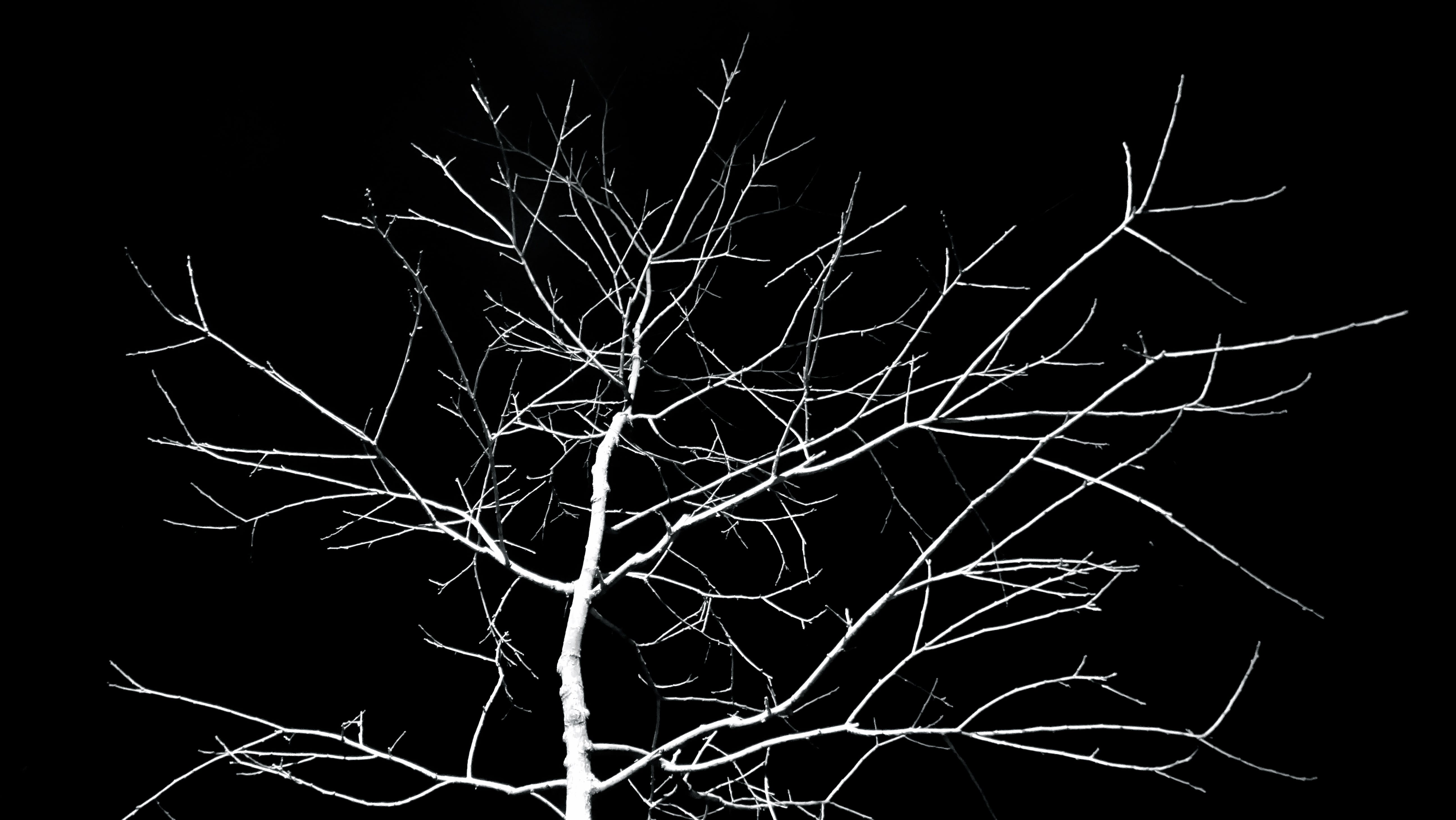 Kostnadsfri bild av grenar, kuslig, mörk, natt