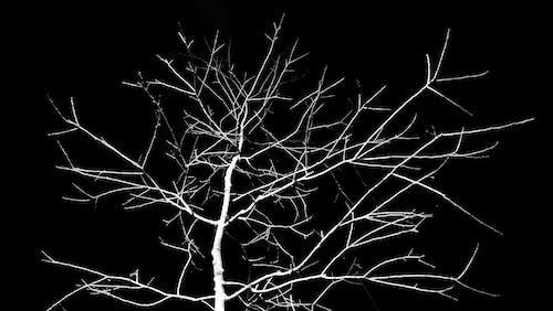 Gratis stockfoto met angstaanjagend, boom, boomstam, donker