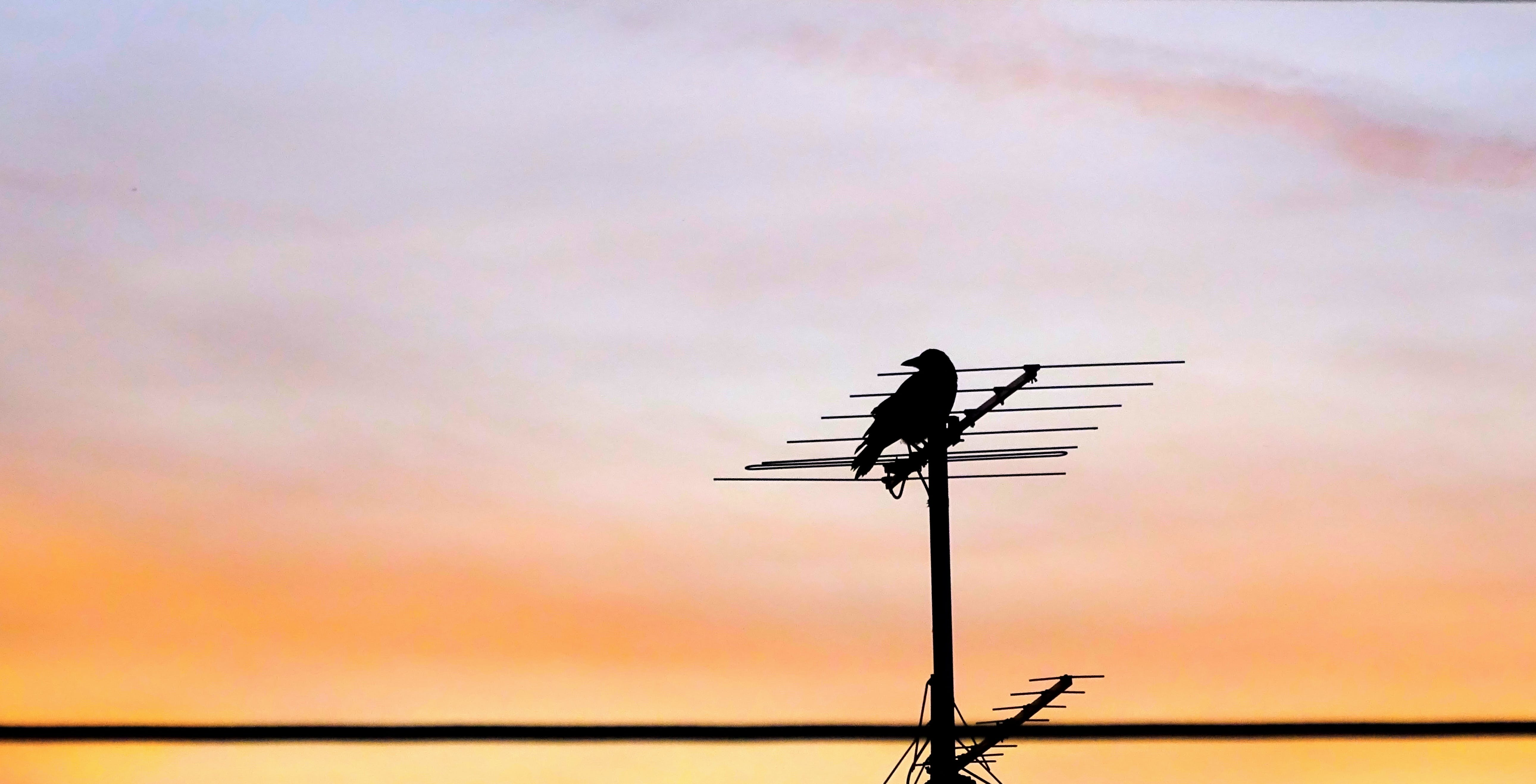 Crow on Antenna during Sunset
