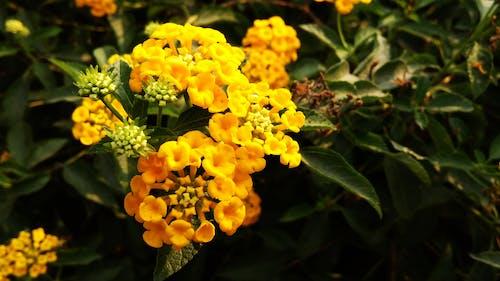 çan çiçeği, Çiçek tarlası, HD duvar kağıdı, sarı içeren Ücretsiz stok fotoğraf