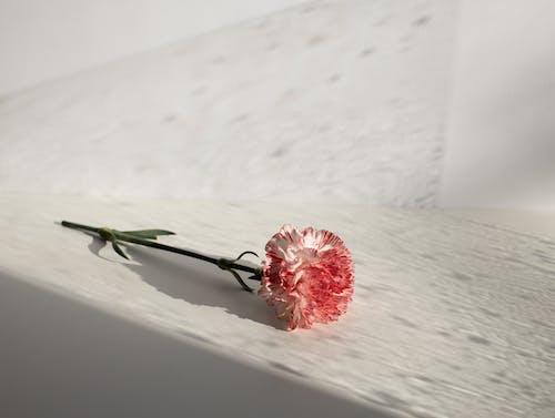 白い雪の上の赤いバラ