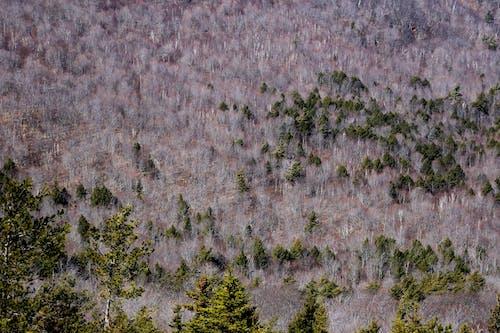 Бесплатное стоковое фото с деревья, лес, с высоты птичьего полета