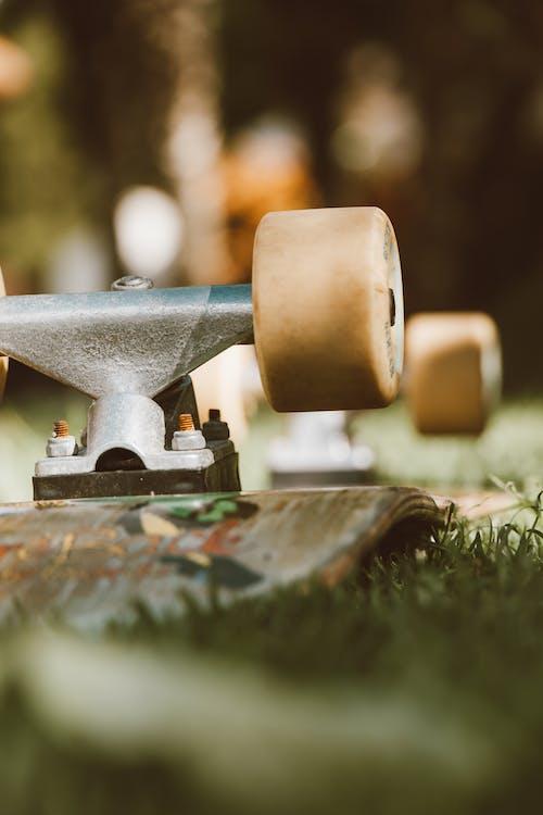 çim, çimen, dikey içeren Ücretsiz stok fotoğraf