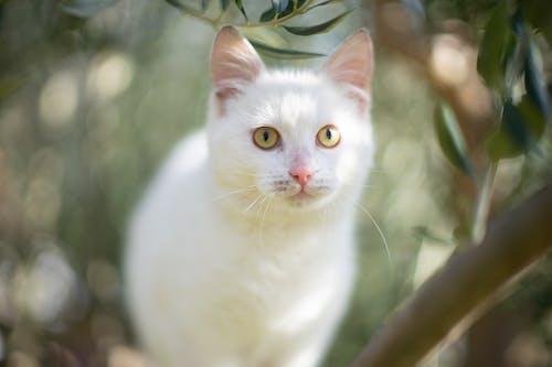 Free stock photo of animal, bokeh, cat