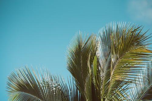 エキゾチック, ターコイズ, トロピカル, パルムの無料の写真素材
