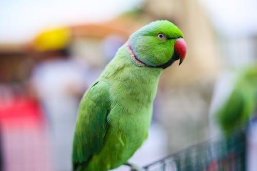 Green Bird in Tilt Shift Lens