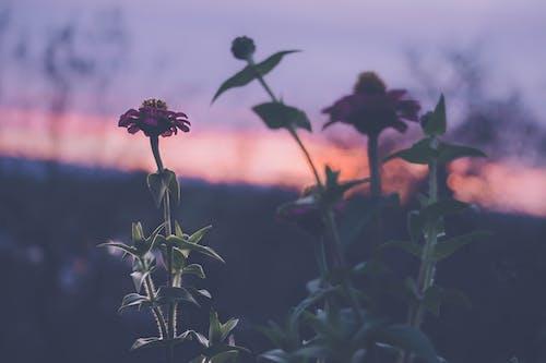 Ilmainen kuvapankkikuva tunnisteilla aamu, auringonlasku, kasvikunta, kasvit