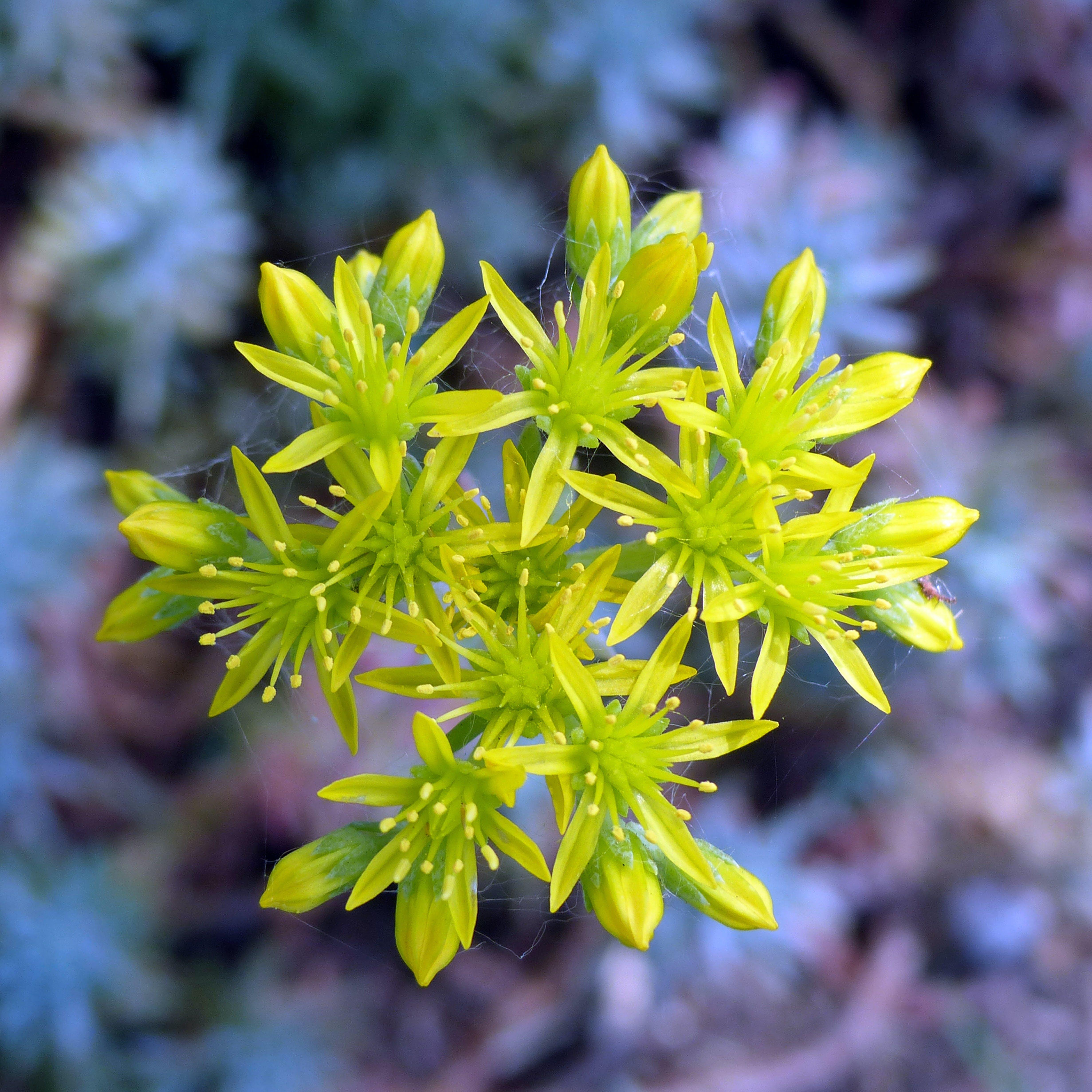 Tilt Shift Lens Photography of Green Flower