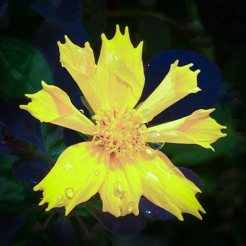 Ảnh lưu trữ miễn phí về những bông hoa đẹp