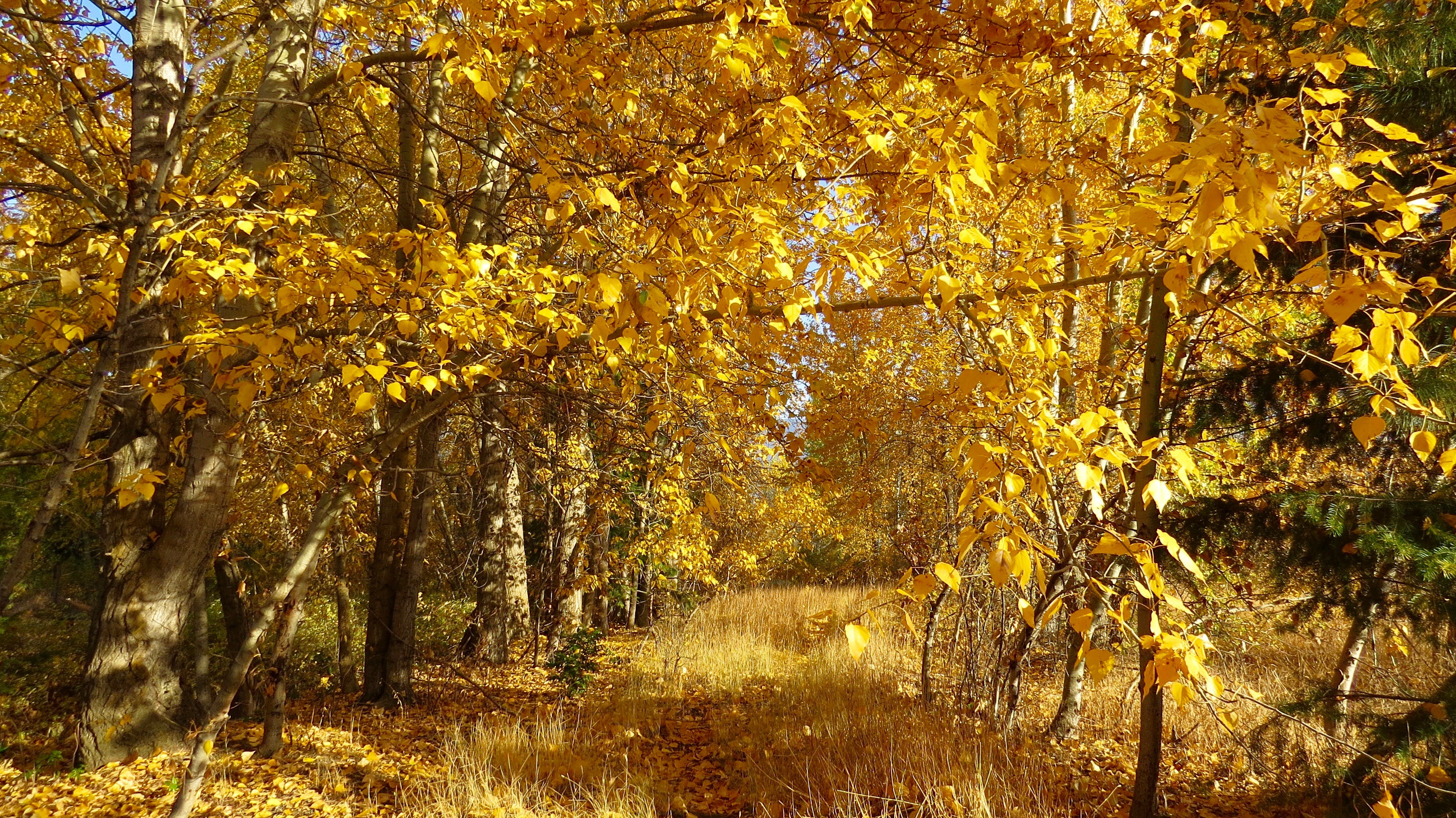 Yellow Trees at Day Time