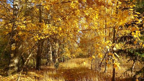 公園, 分支機構, 場景, 天性 的 免費圖庫相片