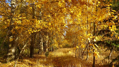 Photos gratuites de arbres, branches, brillant, environnement