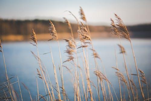 Безкоштовне стокове фото на тему «зерно, поле, Природа»