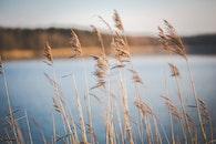 nature, field, lake