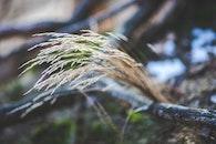 nature, dry, grass