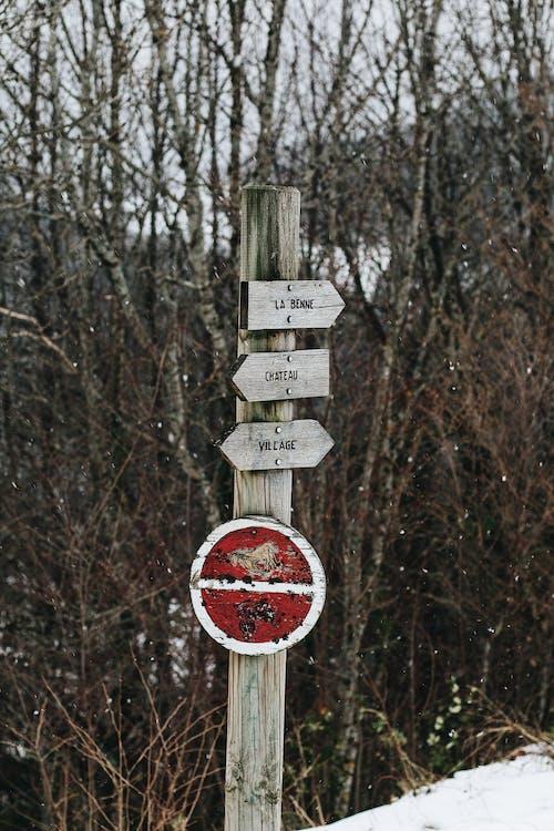 Безкоштовне стокове фото на тему «Деревина, дерево, дорога, застуда»