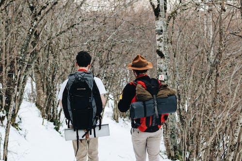 Photos gratuites de arbre, aventure, bois, bouchon