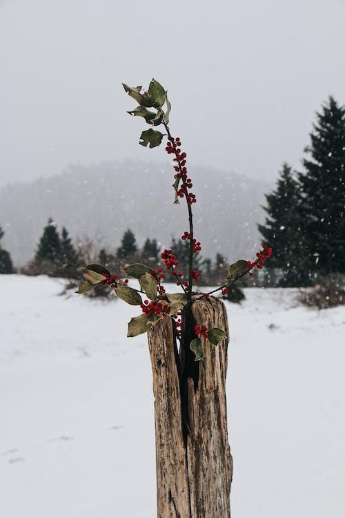 Photos gratuites de arbre, bois, branche, espace extérieur