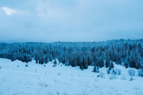 Scenic view of thick coniferous woodland and spacious terrain covered with snow under gloomy sky