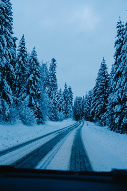 From car windshield snowy roadway running through thick frozen evergreen woodland under gloomy sky
