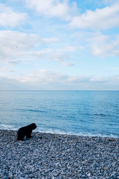 Foto stok gratis air, alam, anjing