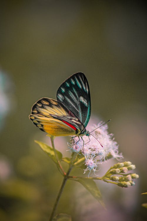 Close-Up Shot of a Butterfly Perched on a Flower
