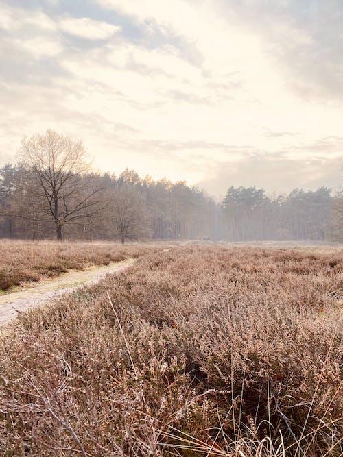 Free stock photo of fog, foggy landscape, forest park