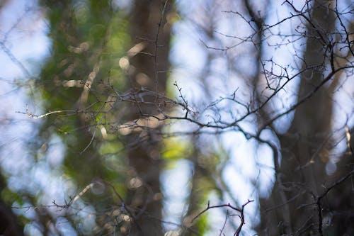 Free stock photo of bokeh, branches, minolta 58mm f 1 2