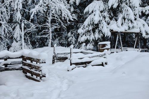 Photos gratuites de arbres, climat, couvert