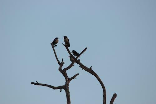 Free stock photo of birds, evening, tree
