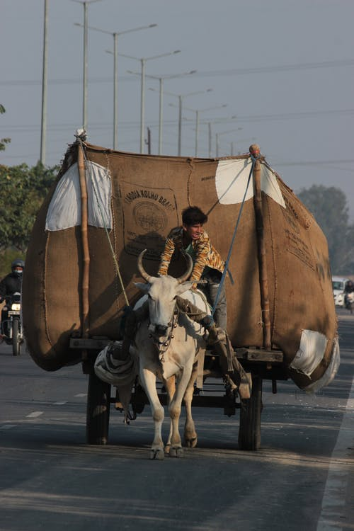 Man in Brown Jacket Riding on White Horse Carriage