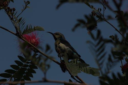 Free stock photo of beautiful flower, sun bird, tree