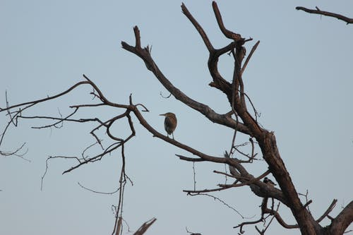 Free stock photo of birds, dry tree, evening