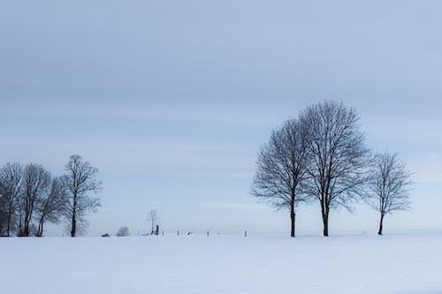 Photos gratuites de arbre, bois, calme