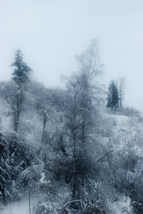 Foggy sky over leafless trees growing on mountain slope covered with snow in winter