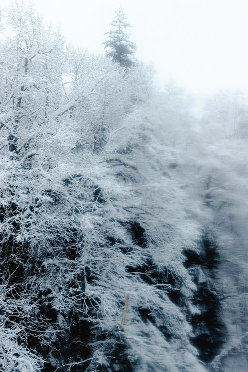 Winter forest with snowy bare trees against overcast sky