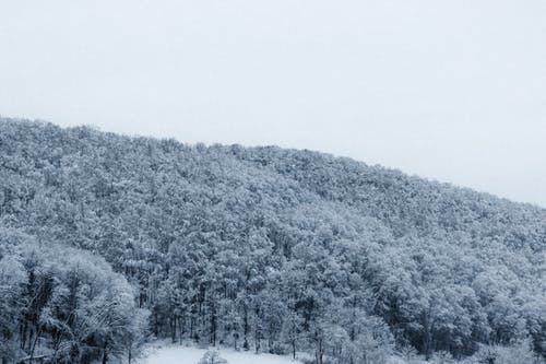 Picturesque scenery of lush forest covered with snow growing in wild mountainous valley under overcast sky