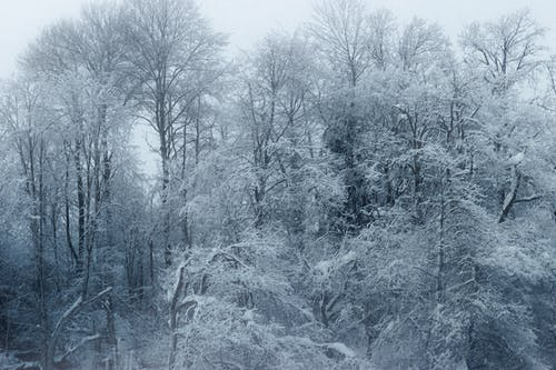 Leafless forest covered with snow on winter day