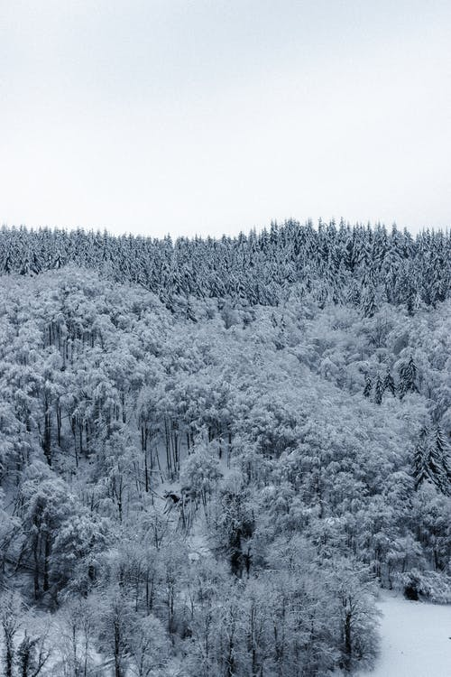 Endless snowy forest on mountain ridge under cloudy sky