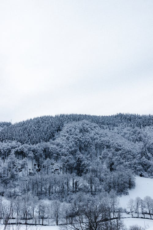 White snow covering lush coniferous forest growing on mountain slope under cloudy sky