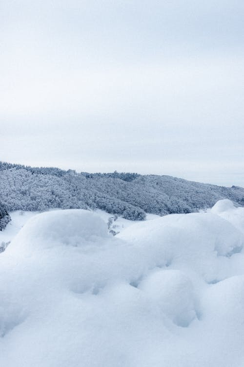 Snowy valley near winter forest under gray sky