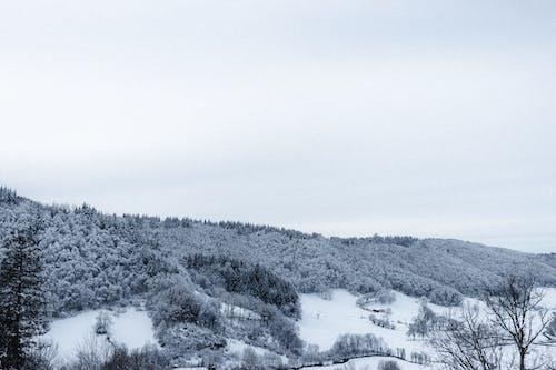 คลังภาพถ่ายฟรี ของ ต้นไม้, น้ำค้างแข็ง, น้ำแข็ง, ปาร์ค