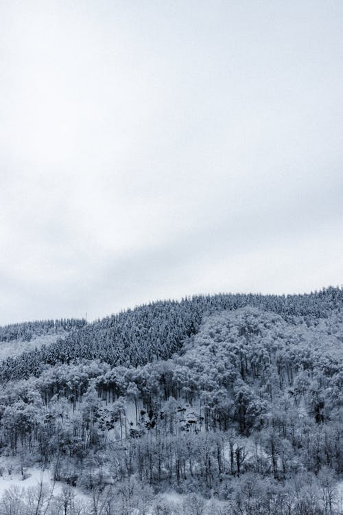 Snowy mountain covered with trees