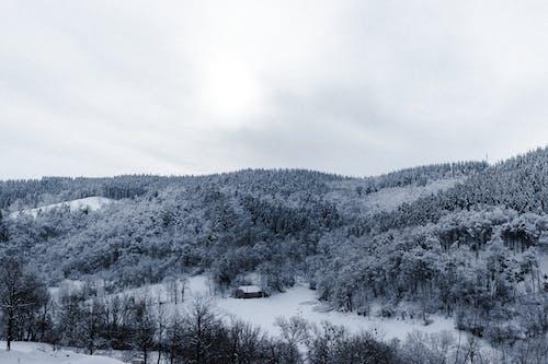 คลังภาพถ่ายฟรี ของ ขาวดำ, ตก, ต้นไม้, น้ำค้างแข็ง