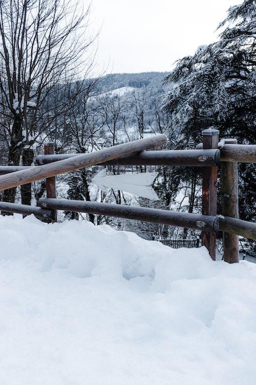 คลังภาพถ่ายฟรี ของ ICEE, กลางแจ้ง, ต้นไม้, น้ำค้างแข็ง