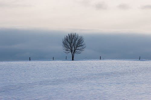 Lonely leafless tree growing on field covered with snow against cloudy sky in nature in winter time in rural area