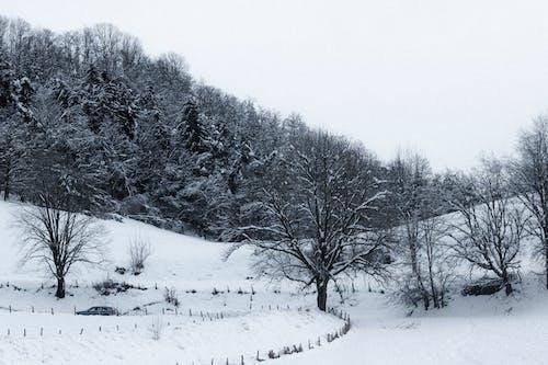 คลังภาพถ่ายฟรี ของ คำแนะนำ, คู่มือ, ต้นไม้, น้ำค้างแข็ง