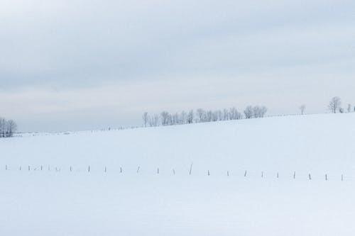 Snowy field in winter nature